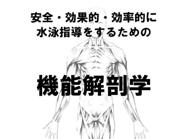 水泳解剖学